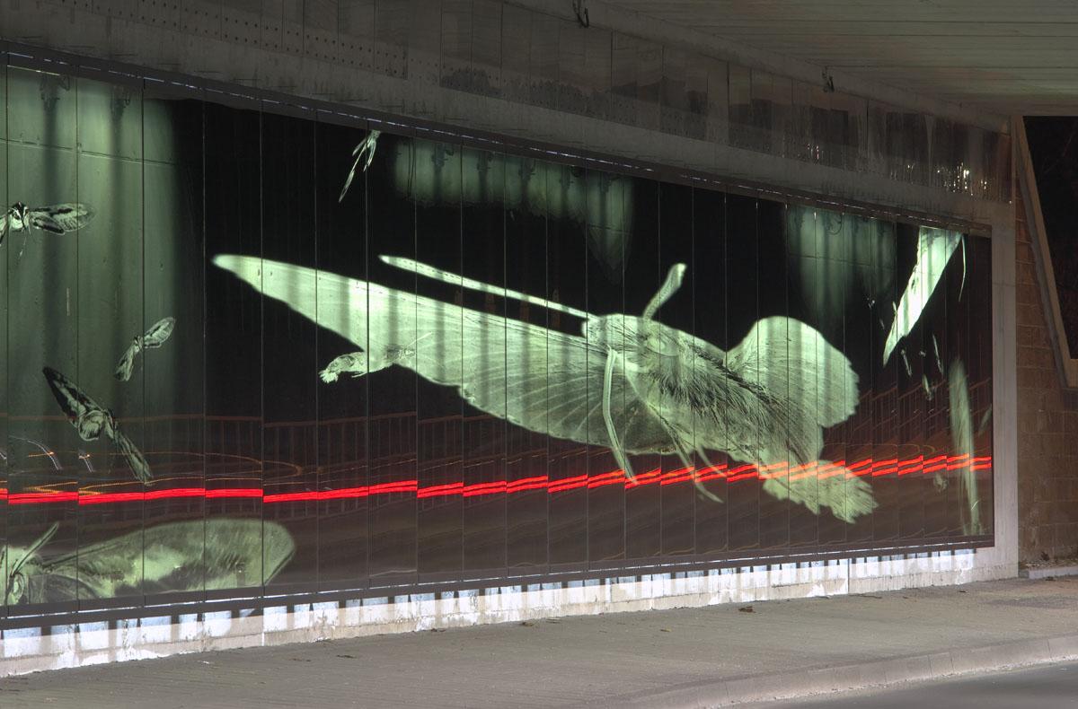 Foto der neugestalteten hinterleuchteten Wand in der Unterführung Schwarzwaldstraße in Karlsruhe. Das Wandbild wird durch einen großen Falter dominiert, daneben erkennt man weitere. Die Falter, die rohe Betonstruktur dahinter und Spiegelungen des vorbeifahrenden Verkehrs. Gemeinsam entsteht ein Ensemble, das sich ständig verändert.